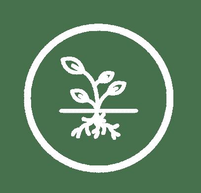 Healthy Roots LLC